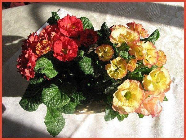 Tres jolie fleur page 2 - Coloriage fleur tres jolie ...