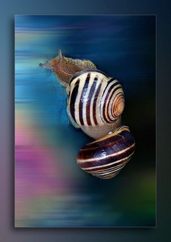 Les escargots 6cb556b3