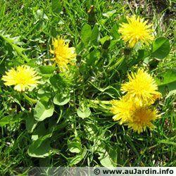 Gilf animee marante 36 centerblog - Mauvaise herbe fleur jaune ...